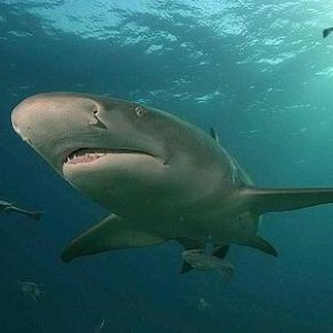 Google under attack from sharks (seriously)