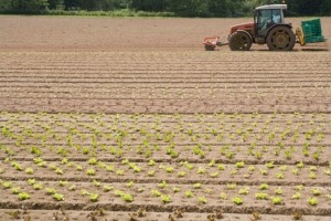 Rural broadband services 'not progressing', NFU warns